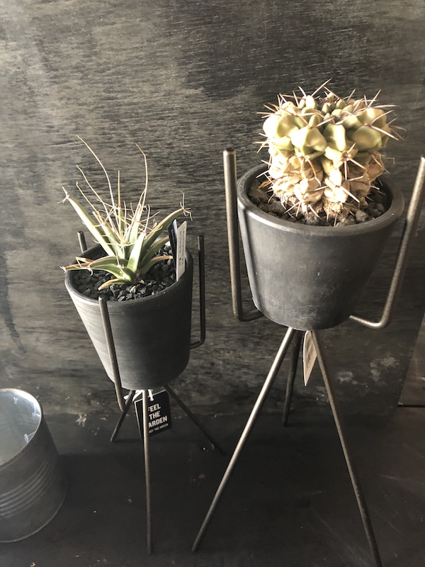 ガレージ スタンド付きブリキポット ロー サボテン 多肉植物 アガベ 塊根植物